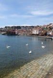 Ohrid, Mazedonien, auf Ostern Schwäne im See Lizenzfreie Stockbilder