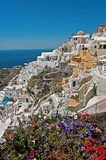 Oia panorama with Petunias at front Stock Image