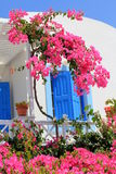 Oia Typical House - Santorini Island. Detail of a Oia typical house, white with colorful flowers and blue doors and windows - same blue as the sky Royalty Free Stock Image