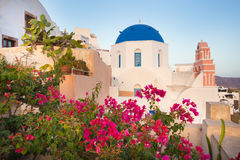 Oia village on Santorini island, Greece. World famous traditional whitewashed chuches and houses and lush floral vegetation of Oia village on Santorini island Stock Photos