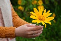 Oidentifierad flicka med den gula blomman på hennes hand Fotografering för Bildbyråer