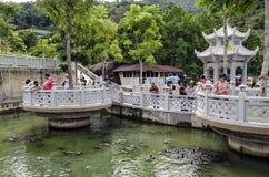 Oidentifierade besökare matar sköldpaddor på dammet för befrielsen för den Kek Lok Si tempelsköldpaddan malaysia penang arkivbilder