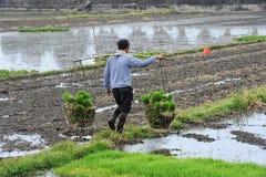 Oidentifierade kinesiska bönder arbetar hårt på risfält royaltyfria bilder