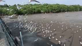 Oidentifierade turister tycker om matning seagullen på Bangpu Samutprakan Thailand, mars 20, 2018 stock video