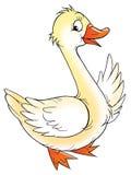 Oie blanche Images libres de droits
