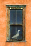 Oie dans l'hublot Image stock