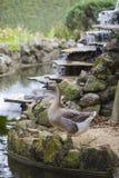 Oie se tenant près d'un étang de fontaine Photographie stock