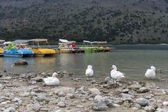 Oie sur la plage photos libres de droits