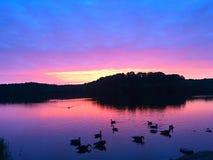 Oies au lever de soleil Photographie stock libre de droits