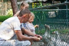 Oies d'alimentation des enfants dans le zoo photographie stock libre de droits