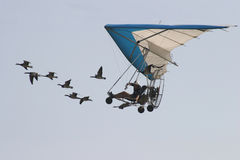 Oies de les d'avec de vol. Image libre de droits