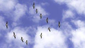 Oies de vol Images libres de droits
