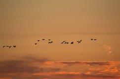 Oies de vol Photographie stock libre de droits