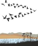 Oies sauvages de migration au-dessus de paysage d'automne Photo stock