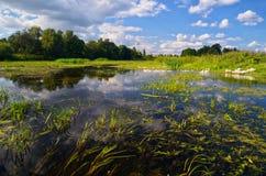 Oies sur la rivière Photos libres de droits