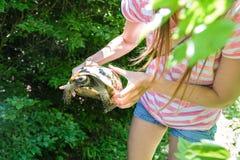 Oigenkännlig flicka i grov bomullstvillkortslutningar och den randiga t-skjortan som rymmer en landsköldpadda i skogen Fotografering för Bildbyråer