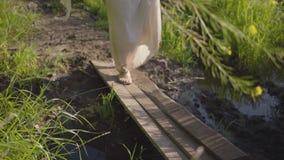 Oigenkännlig kvinna med kala ben och blommor i händer som går till och med den lilla gamla bron av brädena land stock video