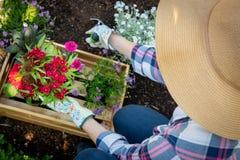 Oigenkännlig kvinnlig trädgårdsmästare som planterar blommor i henne som är trädgårds- Arbeta i trädgården Över huvudet sikt arkivbilder
