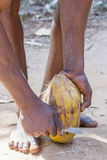 Oigenkännlig man som tar bort det yttre laget och fiber från kokosnöten Arkivfoto