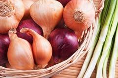 Oignon Images stock
