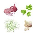 Oignon, ail, persil, aneth Produit-légumes frais de vegetables Photographie stock libre de droits