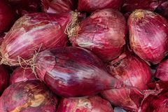 Oignon d'ampoule de Bordea dans la texture de coquille, grands oignons frais, fond de nourriture des oignons Photos stock