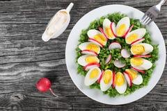 Oignon de ressort, oeufs, salade de radis, vue supérieure Image stock