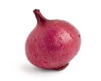 Oignon rouge Image libre de droits