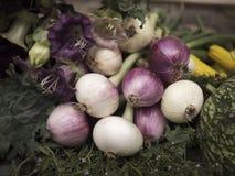 Oignon rouge et légumes Images stock