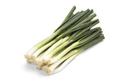 Oignon vert Image stock