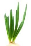 Oignon vert frais Images libres de droits