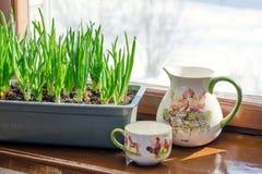 Oignon vert s'élevant dans la boîte sur la fenêtre DIY Le concept de l'aliment biologique sain NON-GMO photos stock