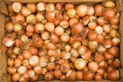 Oignons Photos stock