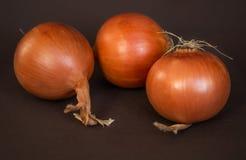 Oignons Photo stock