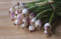 Oignons blancs Photo stock
