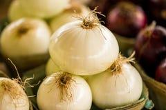 Oignons blancs, marché d'agriculteurs Photographie stock