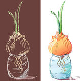 Oignons de germination illustration stock