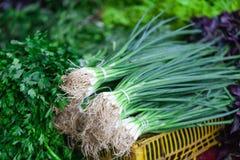 Oignons de ressort également connus sous le nom d'oignons de salade, oignons blancs ou oignons verts sur le marché Photo libre de droits