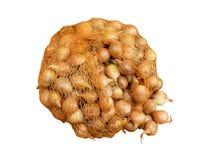 Oignons de semence Photographie stock libre de droits