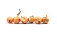 Oignons de semence sur le blanc Photographie stock