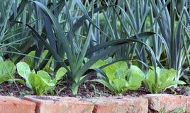 Oignons et laitue de poireau sur le lit de jardin photo libre de droits