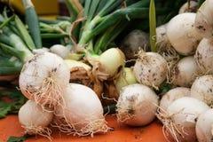 Oignons frais blancs sur le marché Photos libres de droits