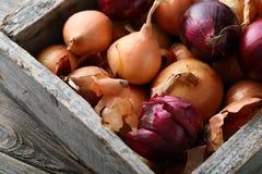 Oignons frais dans la caisse en bois Photographie stock