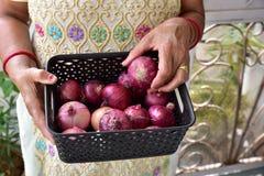 Oignons frais de jardin dans le panier de cuisine, mains humaines tenant peu d'oignons Photo stock