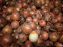 Oignons frais Fond d'oignons Oignons mûrs Photos stock