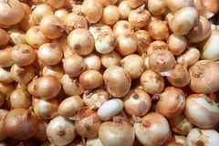 Oignons frais Oignons pour le fond Photo stock