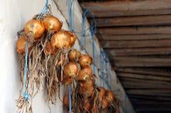 Oignons frais, produit local, légumes organiques images libres de droits