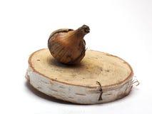 Oignons frais sur un support en bois sur le fond blanc/oignons frais Photos stock
