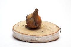Oignons frais sur un support en bois sur le fond blanc/oignons frais Photographie stock