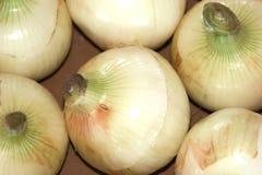 Oignons organiques photographie stock libre de droits
